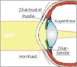 Augenlinse_beschriftet