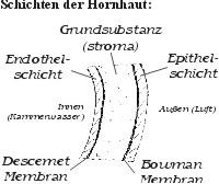 HORNHAUT2
